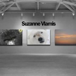 suzanne-online-store