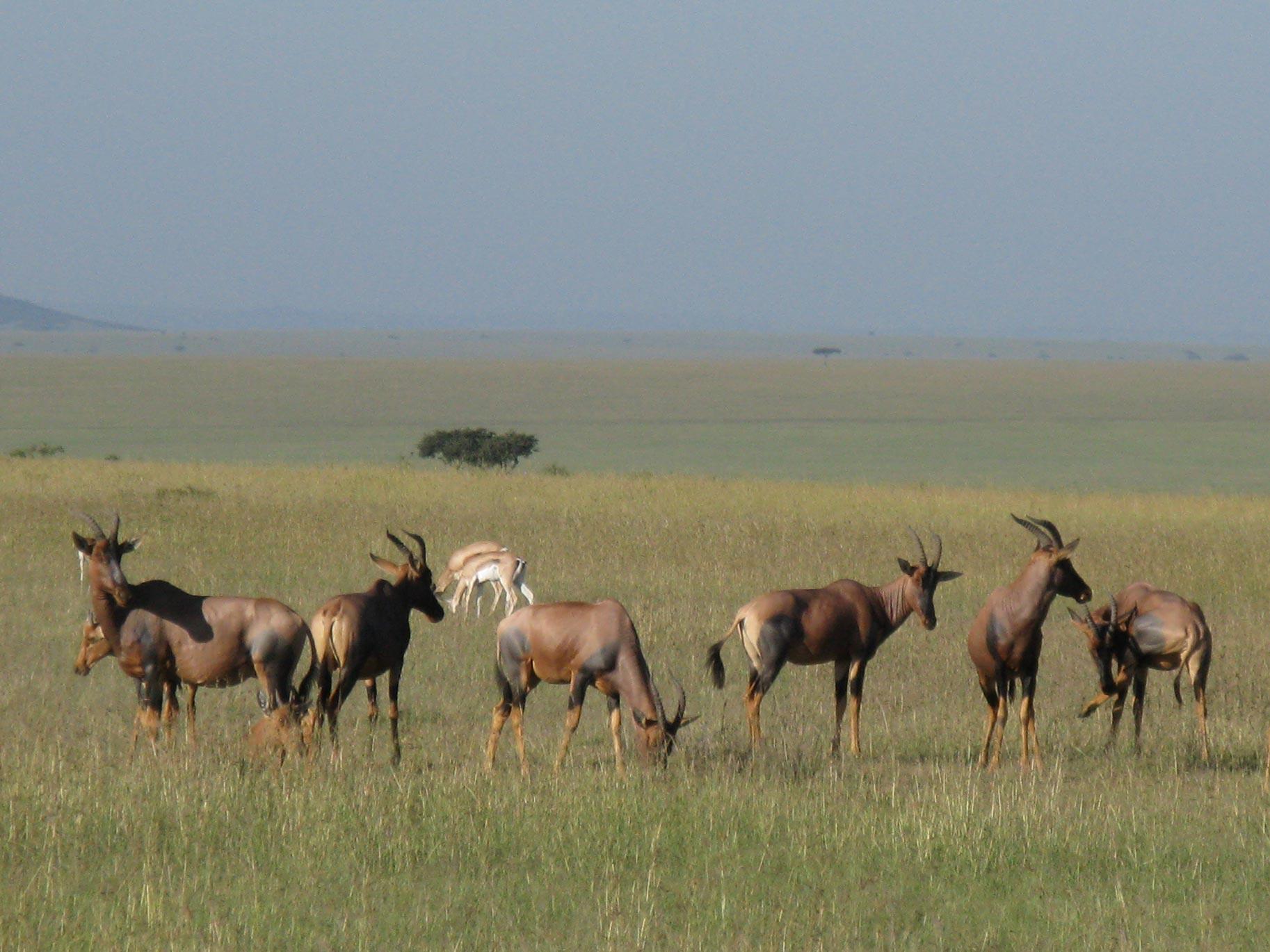 Maasai Mara Africa - Suzanne Vlamis Photography