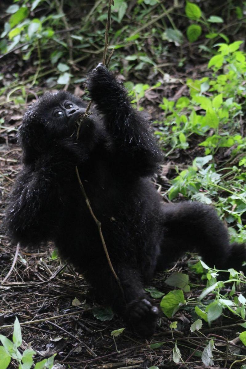 Rwanda-15.jpg