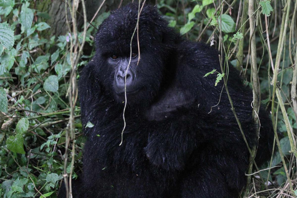 Rwanda-16.jpg