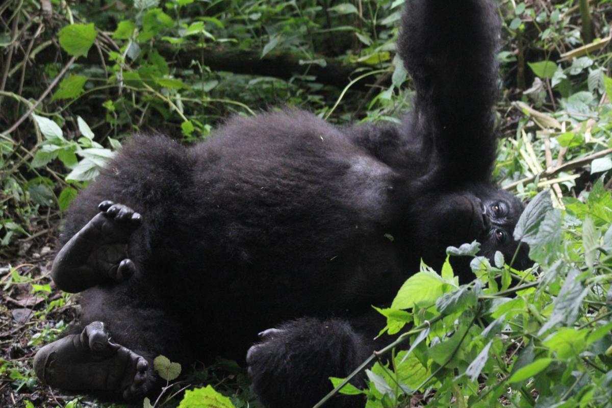 Rwanda-22.jpg