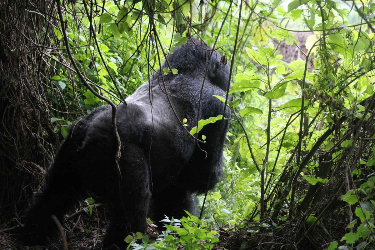 Rwanda-26.jpg