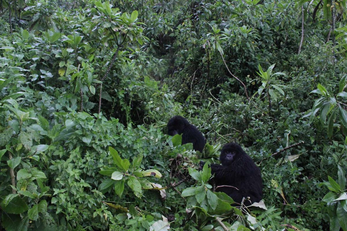 Rwanda-31.jpg