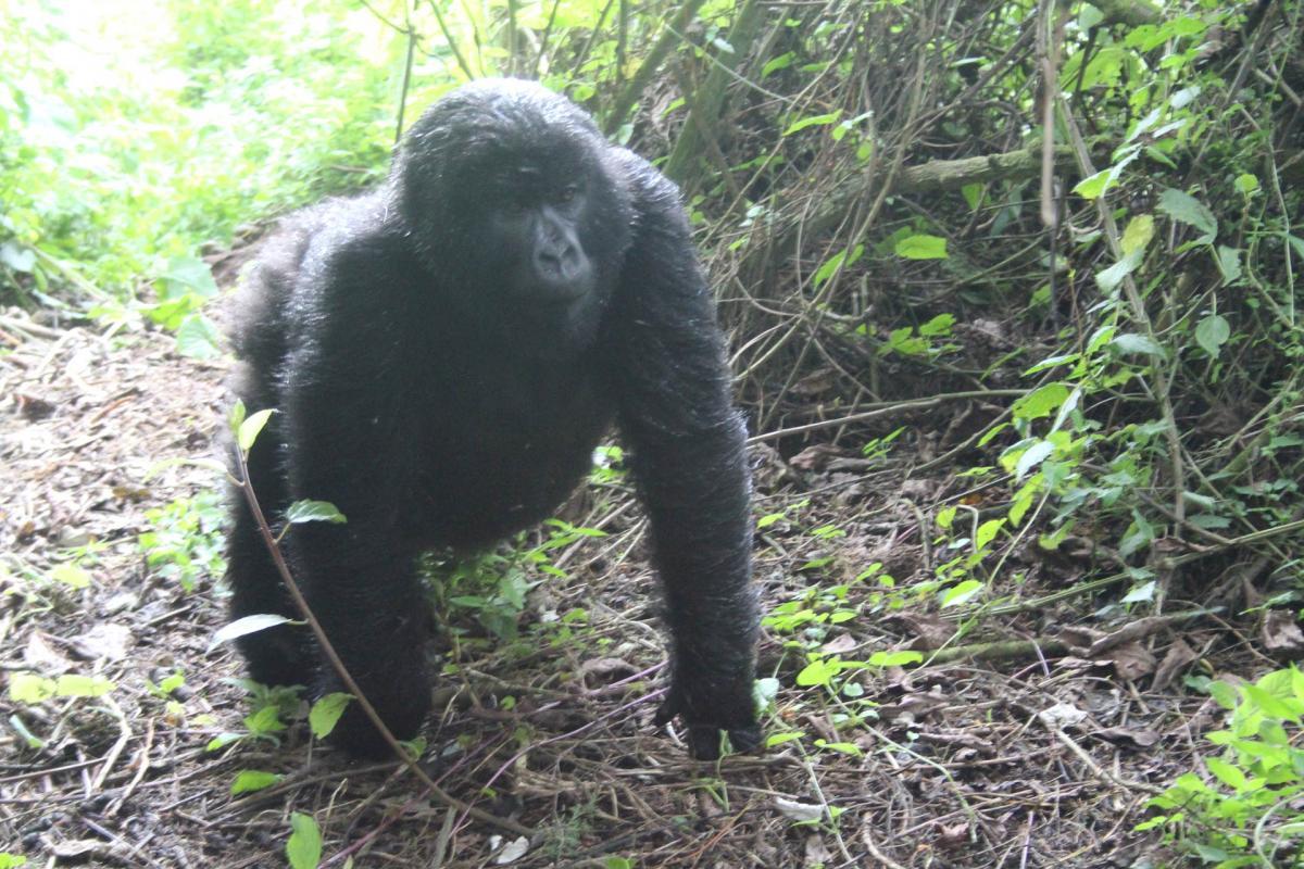 Rwanda-7.jpg