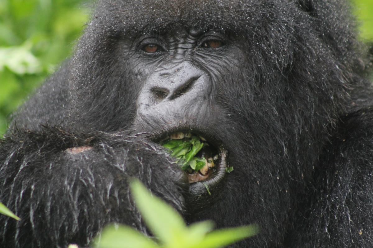 Rwanda-4-w